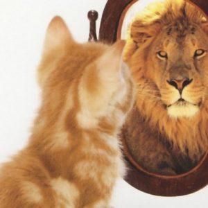 Önismeret, életvezetés